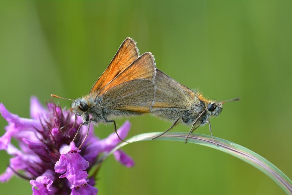 Becki Butterfly Nude Photos 15